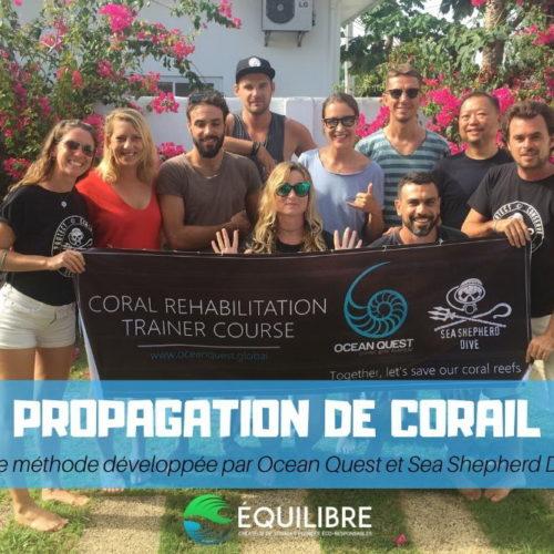 Propagation du corail